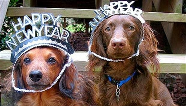 New-Year-Dogs