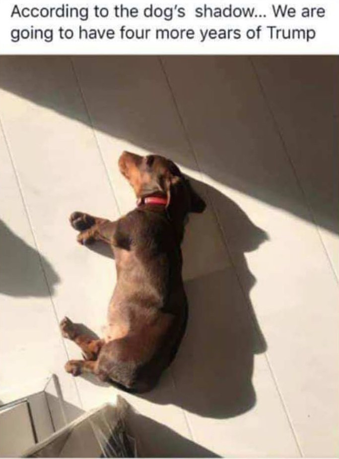 Dog's shadow0-4 more years of Trump