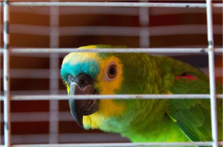 Floriduh parrot