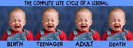 Life cycle of a Librul