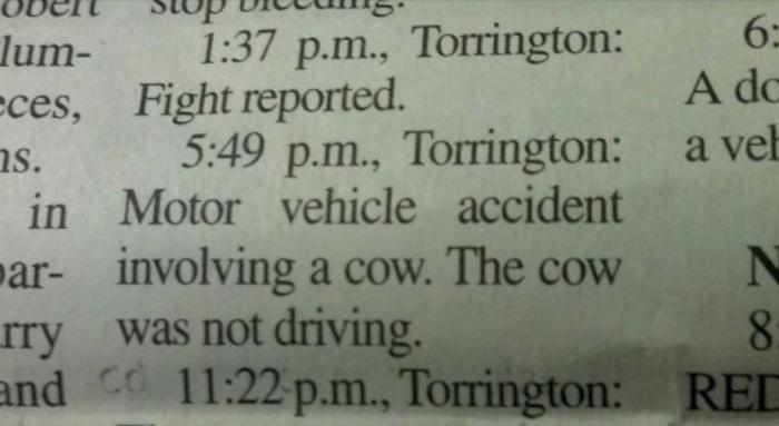 cow-accident