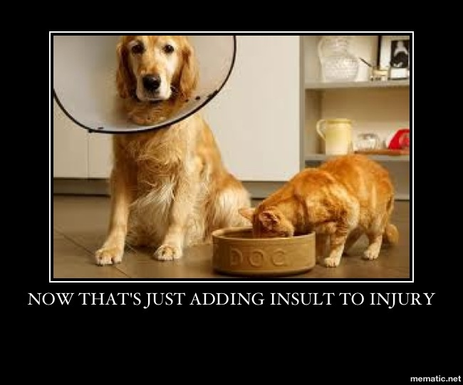 Dog-Cat-Insult-Injury