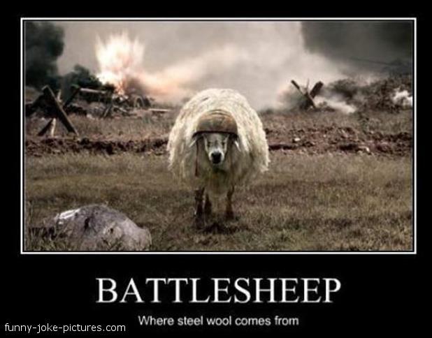 battle-sheep-steel-wool