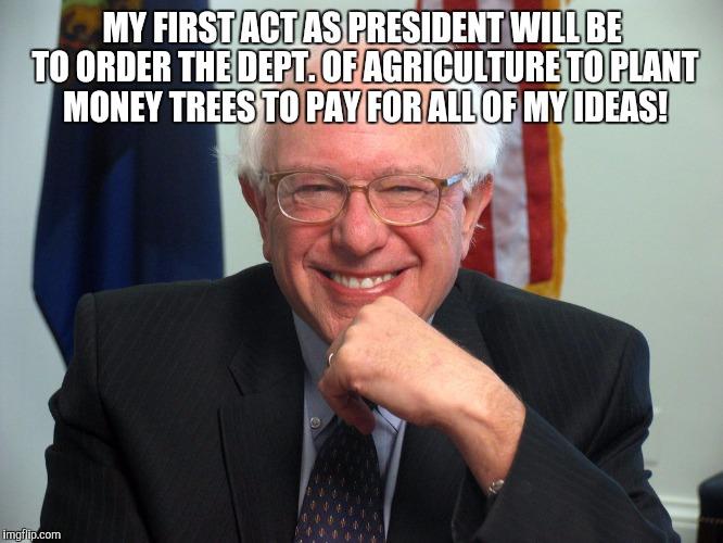 Bernie-money tree
