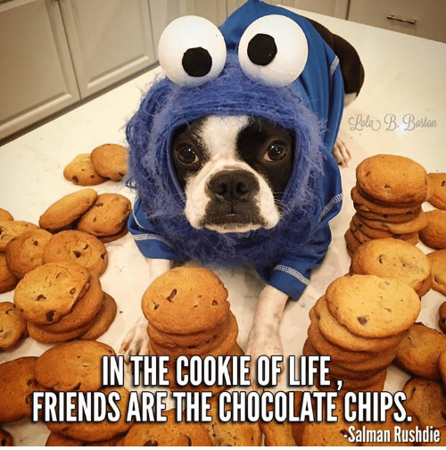 in-the-cookie-oflife-friends-are-the-chocolate-chips-salman-26971720