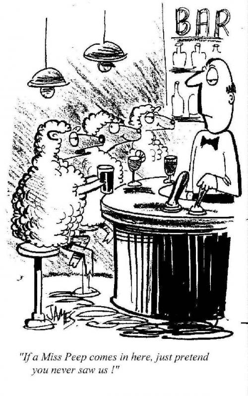 sheep-in-a-bar