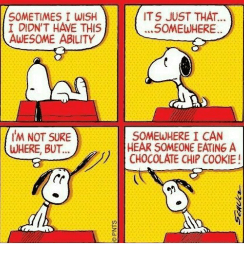 Snoopy-hears someone eating chocolate chip cookie