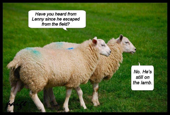 Still on the lamb