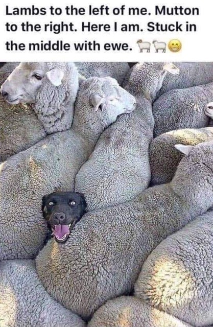 Stuck in the middle with Ewe