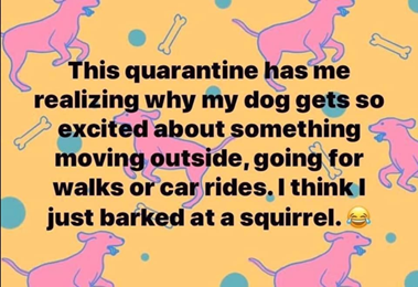 Barked at a squirrel